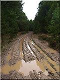 NZ7813 : Bridleway through Newton Mulgrave Woods by Stephen McCulloch