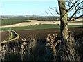 NO4600 : View north of Kincraig by James Allan