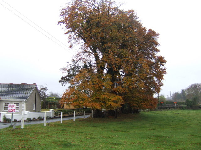 Fine autumnal beeches