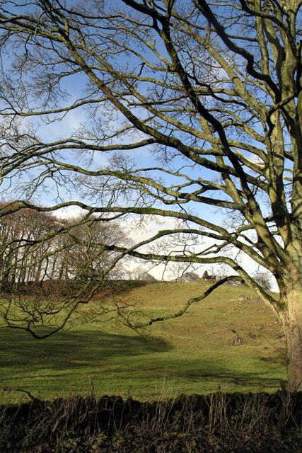 Tree beside the B5056