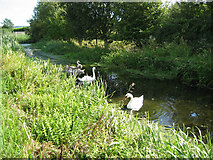 SK7431 : Grantham Canal, Harby by Kate Jewell