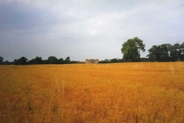 Rape field in the Croome Landscape Park