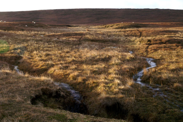 Moorland at Dalsetter