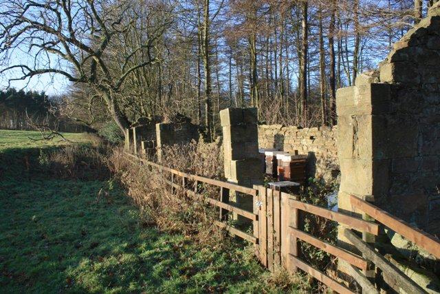 Ruined Barn, Gibside