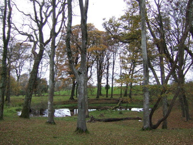 Pond in the beeches