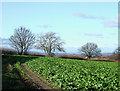 SO5299 : Bridleway past Turnip Field, Ruckley, Shropshire by Roger  Kidd