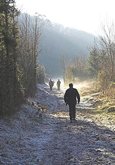 Frosty morning laneway