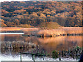 SD4774 : Evening at Leighton Moss by sylvia duckworth