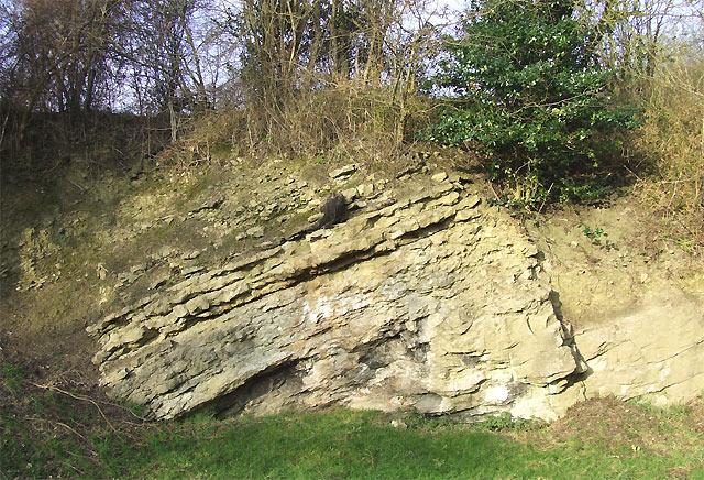 Silurian (Wenlock) Limestone, Dudley, Worcestershire