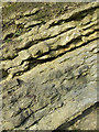 SO9391 : Silurian  Limestone (detail), Dudley, Worcestershire by Roger  Kidd