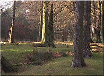 SK2579 : Granby Wood by michael ely