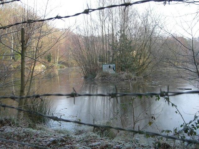 Owlbeech wood pond