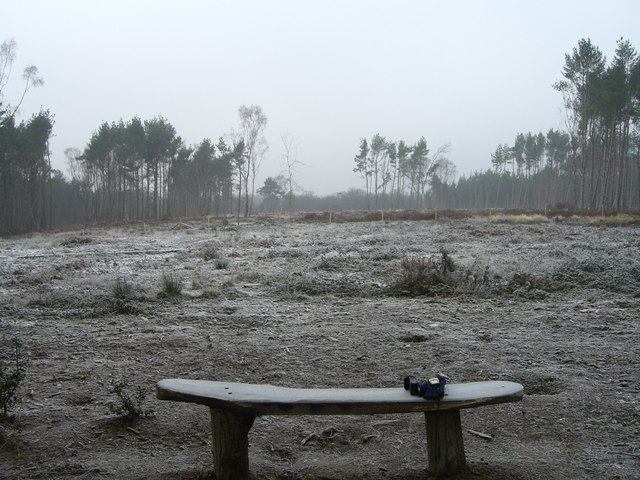 Owlbeech wood conservation area