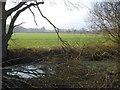SO8144 : Pond at Blackmore End by Trevor Rickard
