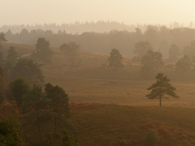 Valley between Acres Down and Wick Wood, New Forest