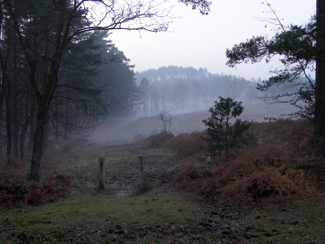 Edge of Highland Water Inclosure, New Forest