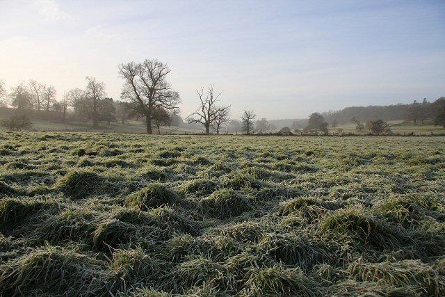 Frosty fields in Ickworth Park