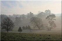 TL8162 : Valley of the River Linnet, Ickworth Park by Bob Jones