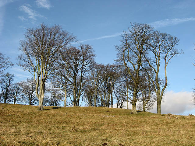 Deciduous trees on Ewe Hill