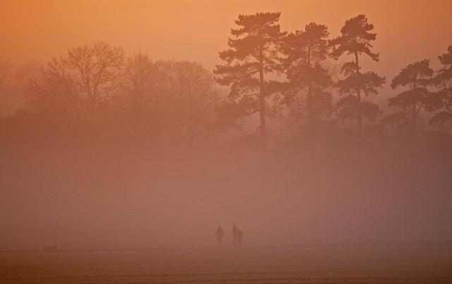 Misty Dogwalkers