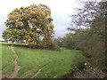 SO3813 : Oak tree by the Trothy by Jonathan Billinger