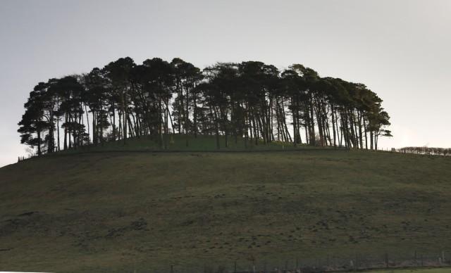 Hill Plantation