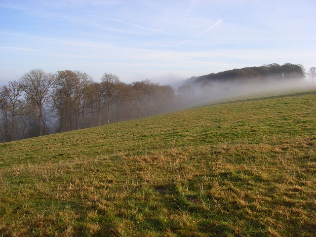 The southern edge of Idlecombe Wood