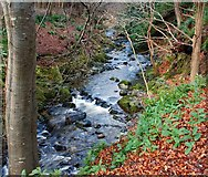 J3532 : The Shimna, Tollymore forest (1) by Albert Bridge
