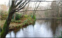 J3532 : Millpond, Tollymore forest by Albert Bridge
