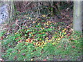 SJ2905 : Fallen fruits by Stephen Craven