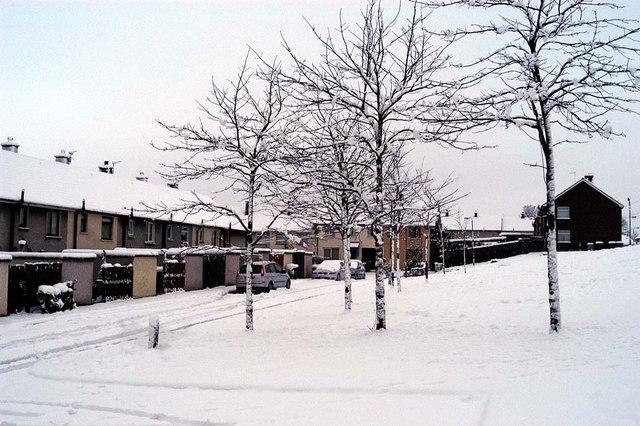 A Snowy Scene #1