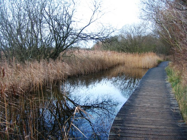 Dipping Pond or Boardwalk Pond