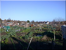 TL4658 : Fairfax Road allotments by Keith Edkins