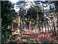 TG3130 : Dense undergrowth by Evelyn Simak