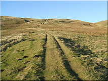 NY7719 : Ancient track up Tinside Rigg by David Brown