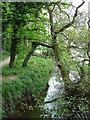 SJ6576 : Forge Brook, Marbury Country Park by Carys Brewster
