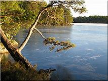NH9718 : Loch Garten by jerry sharp
