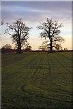 TL8063 : Trees in Little Saxham by Bob Jones