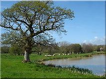 SS2201 : Lake at Langford Hele by Graham and Liz Jones