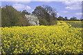 TQ6059 : Fields in Wrotham by dennis smith