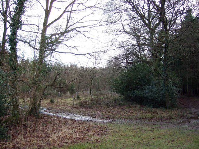 Coopers Wood, New Forest.