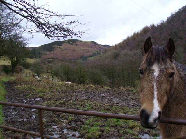 Secluded valley north of Bryngwyn