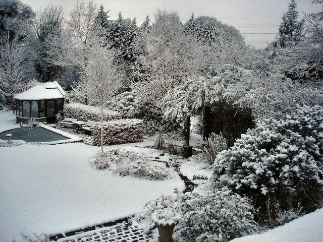 Snow Garden