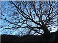 SD2091 : Upward view of tree silhouette by Andrew Hill