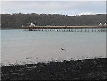 SH5873 : Garth Pier, Bangor by Eirian Evans