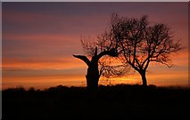 TL8063 : Silhouetted trees at Little Saxham by Bob Jones
