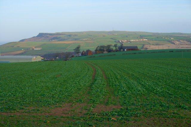 Field Near Craggs Hall Farm