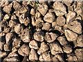 TL4884 : Harvested sugar beet detail by Rodney Burton