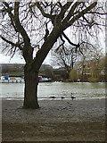 TL1998 : River Embankment by Alan Murray-Rust
