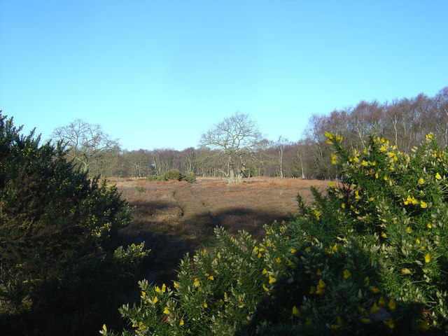 Lowland heath at North Cliffe Woods